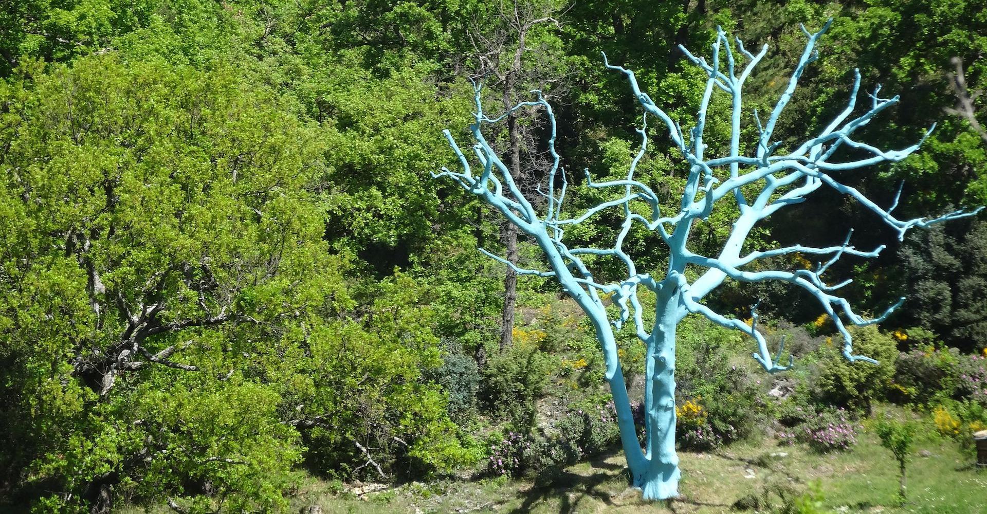 Bos in de Provence